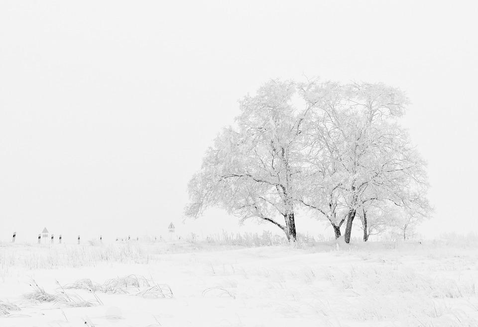 winter-20234_960_720